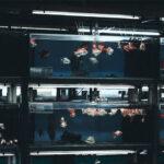 Aquarium-Supplies-Melbourne