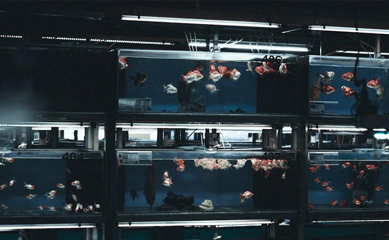 Aquarium Supplies Melbourne